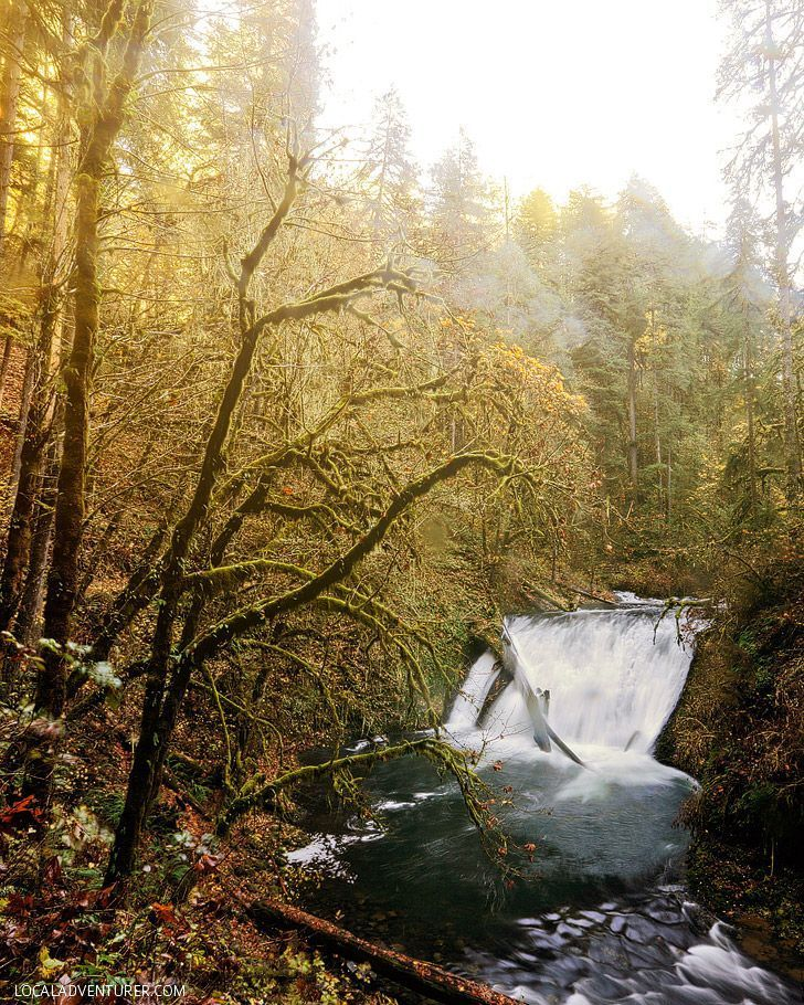 Photo Guide: Trail of Ten Falls Silver Falls State Park Oregon // http://localadventurer.com