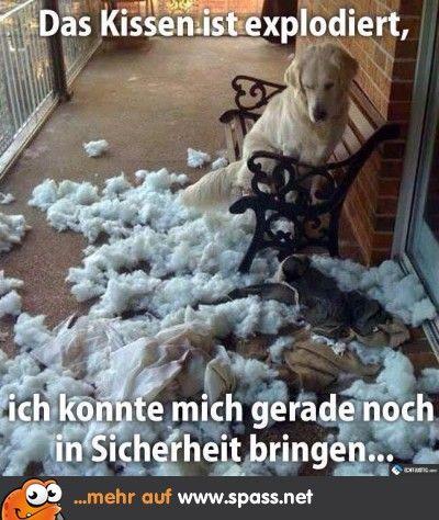 Gute Ausrede, Hund
