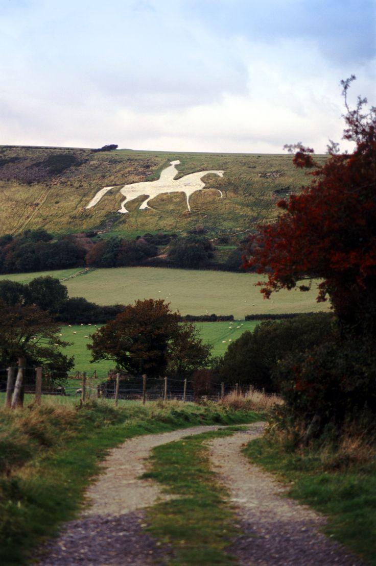 Free Stock photo of white horse near osmington dorset ...
