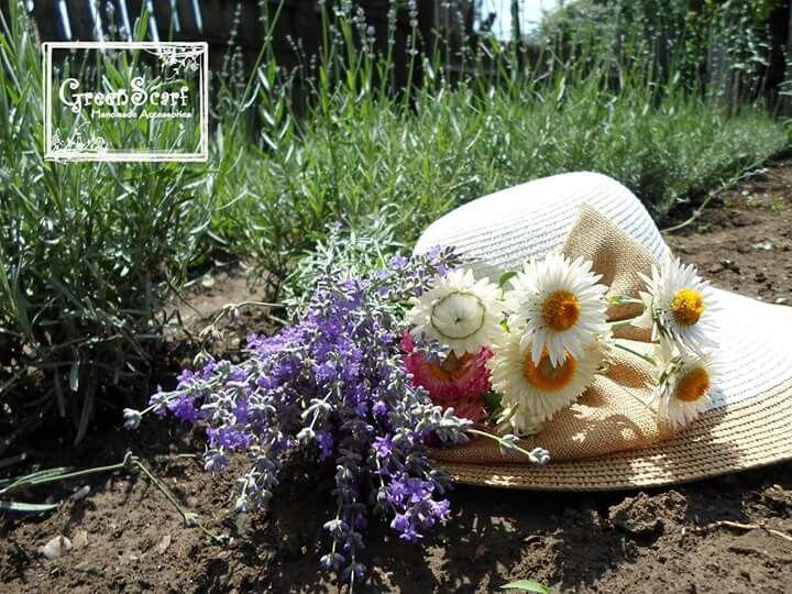 Lavender fresh flowers. GreenScarf lavender garden