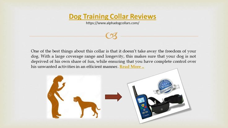 The remote which comes with the training collar also has a LED back-light which makes for easy night usability and readability. There is also a 30 day money back policy to take care of all your apprehensions with respect to this amazing dog training collar.