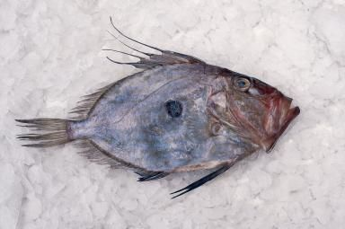 John Dory: The Ugliest Fish You'll Ever Love: John Dory