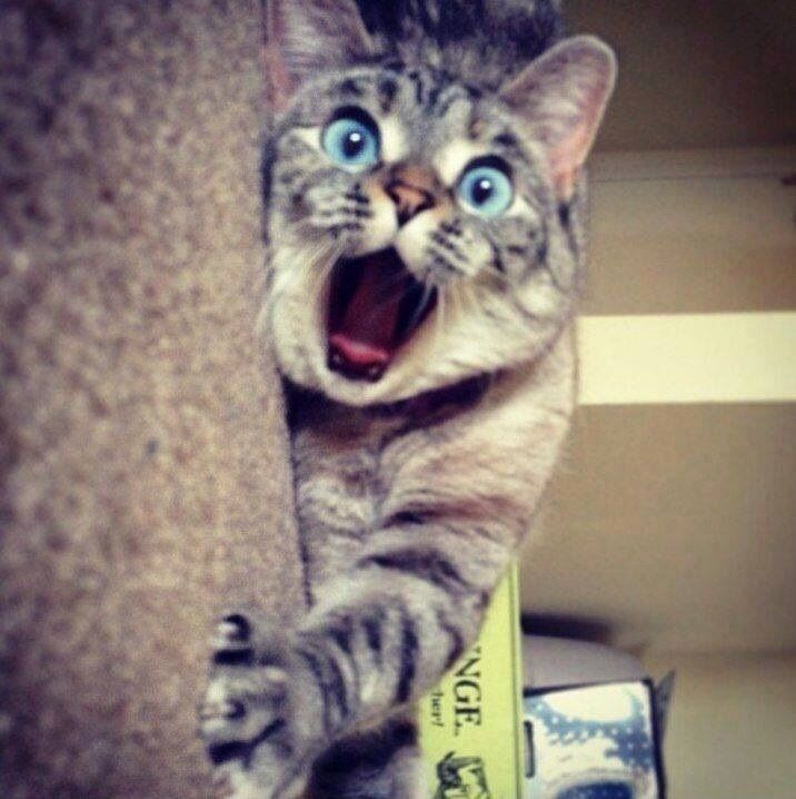 """"""" Ahh! Meh claw is caught on deh other side of dis scratching post and I can'ts get it off. HELPS ! """""""