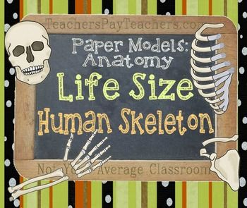 "Great as a puzzle, project, or as a classroom display!HUGE document with built-in varying degrees of difficulty. Great for young students or college students.This is a FULL SET of bones from head to toe. The bones print in segments that are true to life size proportions (for someone around 5'3"") I hand draw all of my paper model sets with great care for accuracy."