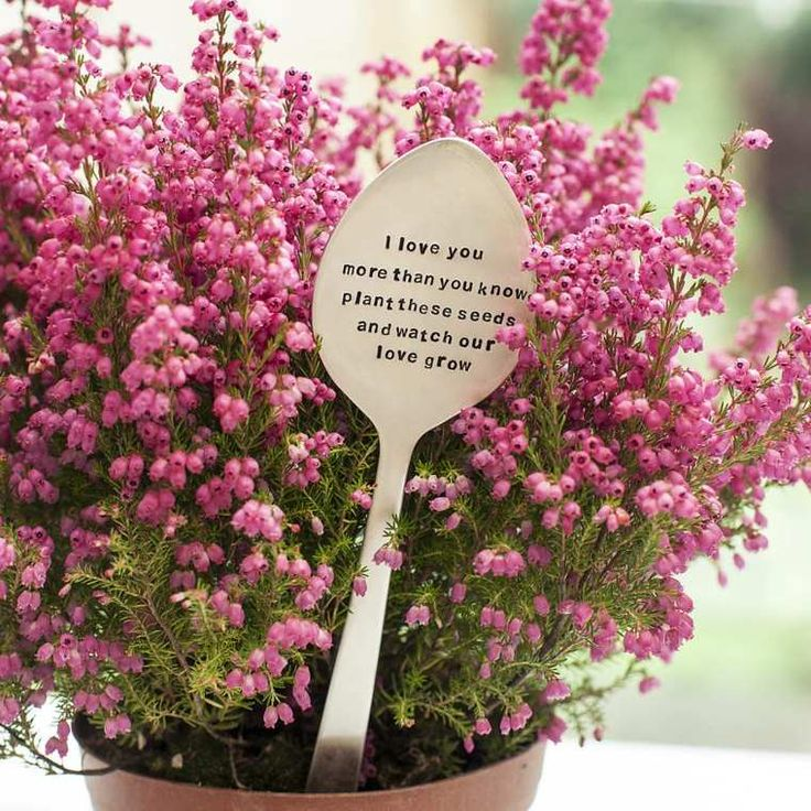 cuillere plantes pots noms