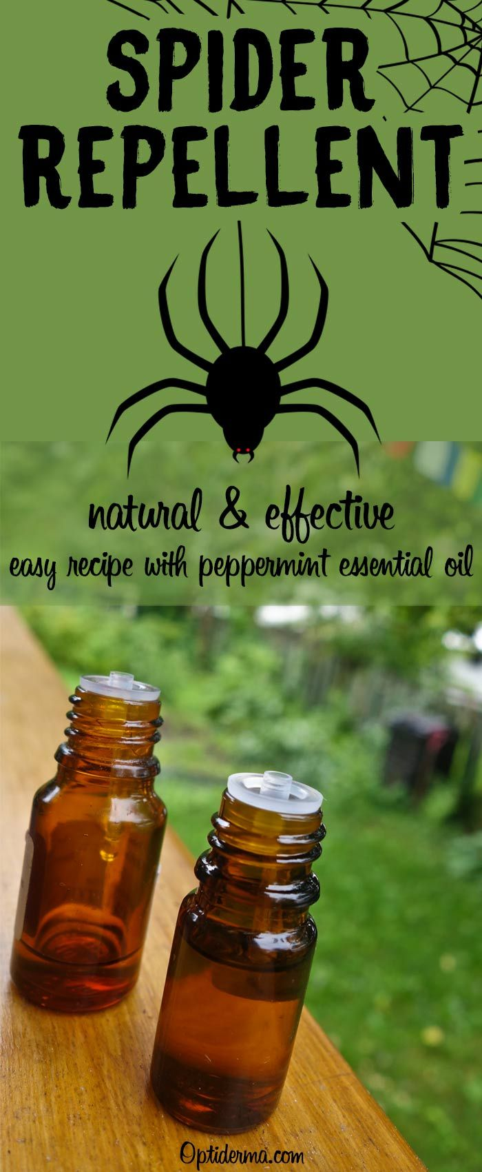 Peppermint Oil For Spiders How To Use It To Repel Spiders Peppermint Oil For Spiders Peppermint Essential Oil Uses Peppermint Spider Spray