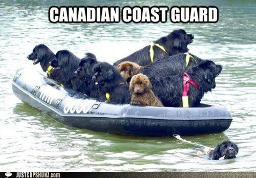 Fear not, the Canadian Coast Guard is here! #Newfloundlanders #dogs #Canada #cute