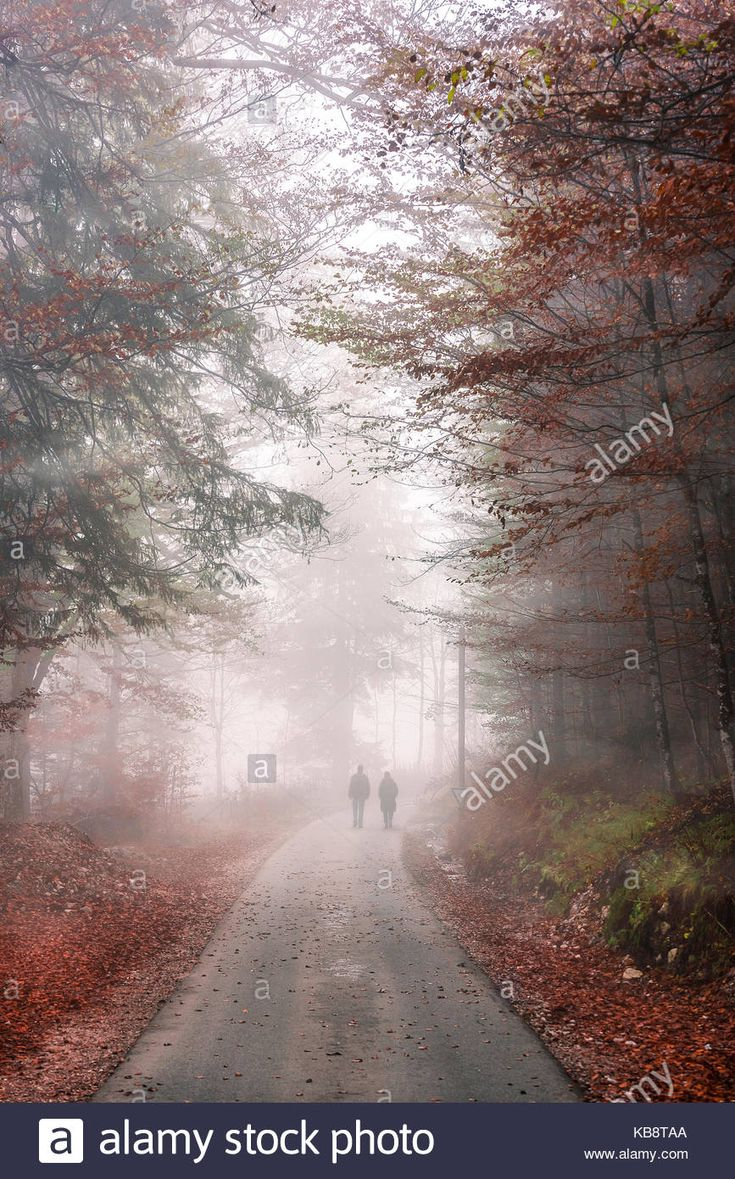 fall-image-with-a-road-crossing-an-autumn-forest-through-the-cold-KB8TAA.jpg (867×1390)