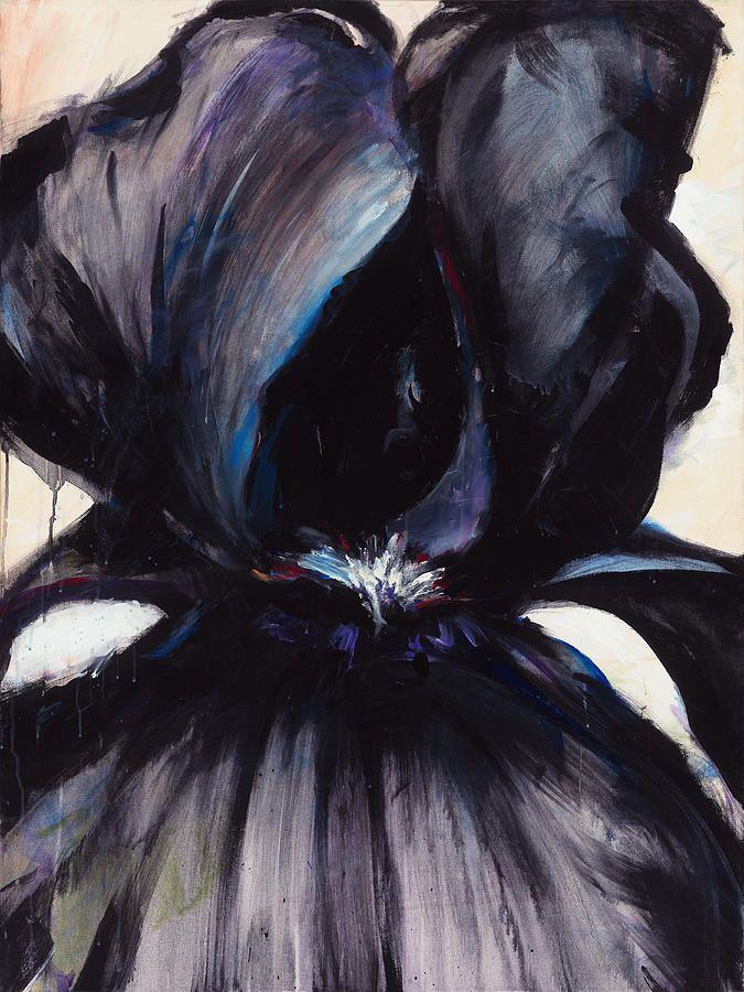 Black iris stock photos
