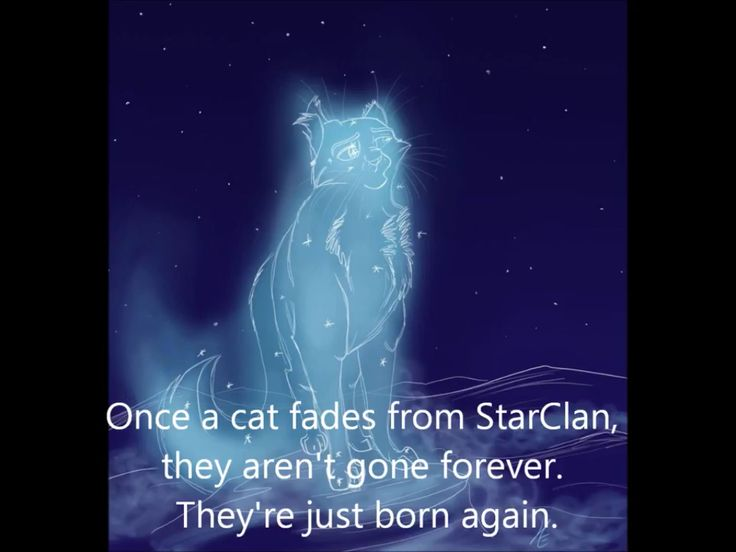 THIS MAKE SO MUCH SENSE I JUST REALIZED. IF A FADED CAT FADES AWAY FULLY THEN THEY'RE REBORN SO MAYBE WAY IN THE FUTURE OLD CATS CAN BE REBORN
