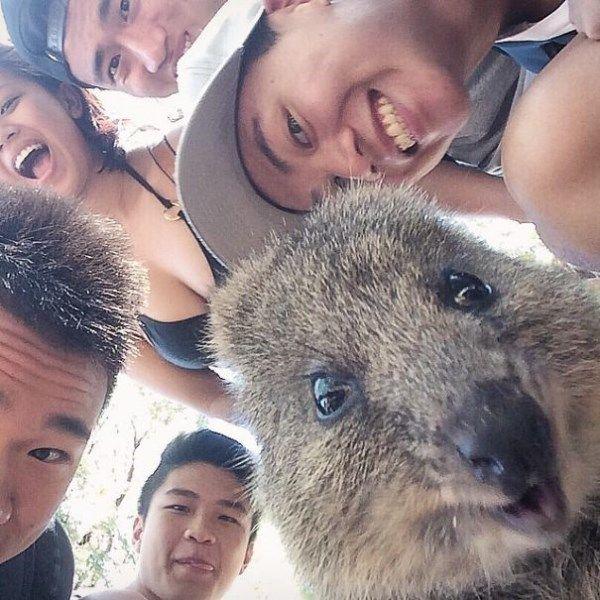 Nejroztomilejší trend současnosti v Austrálii? Selfie s neobvyklým klokanem:)