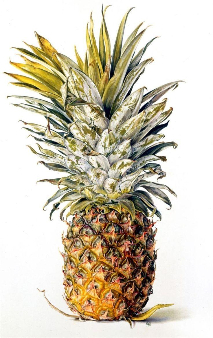 vintage pineapple illustration wwwimgkidcom the