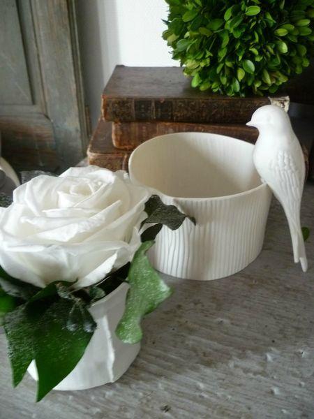 Rose blanche stabilisée et lierre stabilisés.