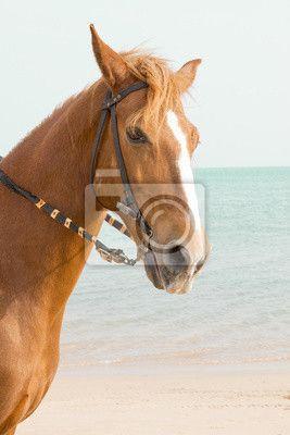 Fotobehang Bruin paard dat zich in de zee