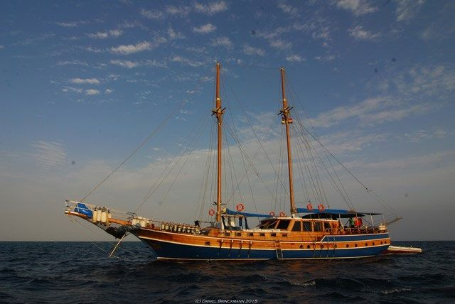 MS/Y San Marco - Red Sea Liveaboards - Dive Discovery Red Sea http://www.golettasanmarco.com