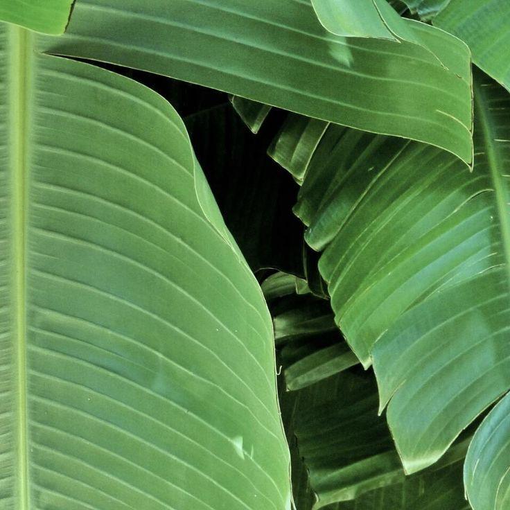 Visual pause #greens #palmleaves #botanicalpickmeup #visualpause #photography #naturephotography #leavesofgreen #texturelove #patternsofnature #naturelover