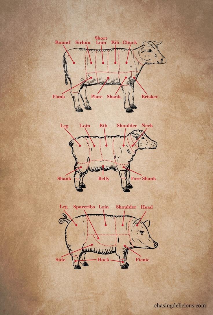 Primal Cuts - Kitchen 101 Meat Cuts