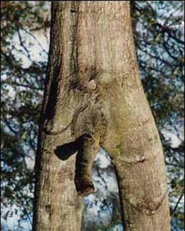 Weird Trees Photos