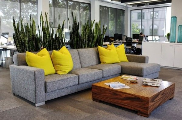 In this modern office space, both plants and furniture divide the area with tall spiky greenery emerging from the back of a low modern couch...