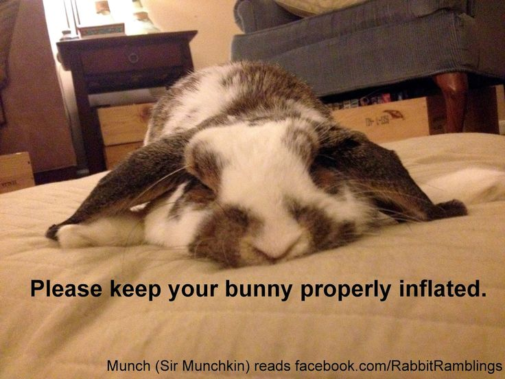 I'm having bunny trouble, please help me?!?