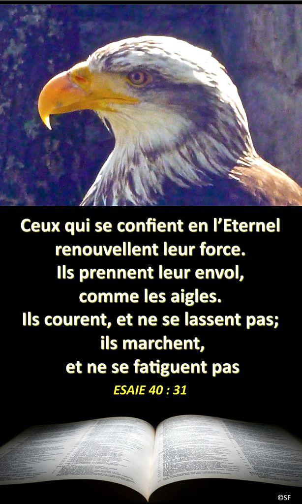 https://flic.kr/p/JtK8zt | Esaïe 40, 31 | Ebenezer Halleluiah Creation Aigle à Coucy (Aisne) 5 mai 2013