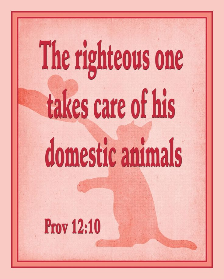 A good reminder from God's word is to care for our pets. The following excerpt is from the Awake! of 2004. Follow the link to read the whole...