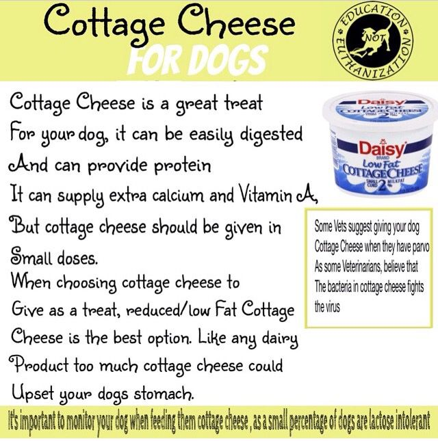 cottage cheese for dogs