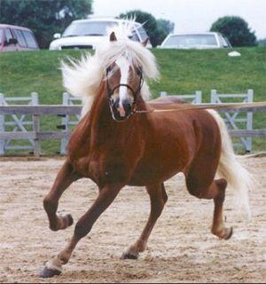 Horse Horse Horse Horse: Beautiful Horses, Animals, Horse Breeds, Beauty, Haflinger Horse