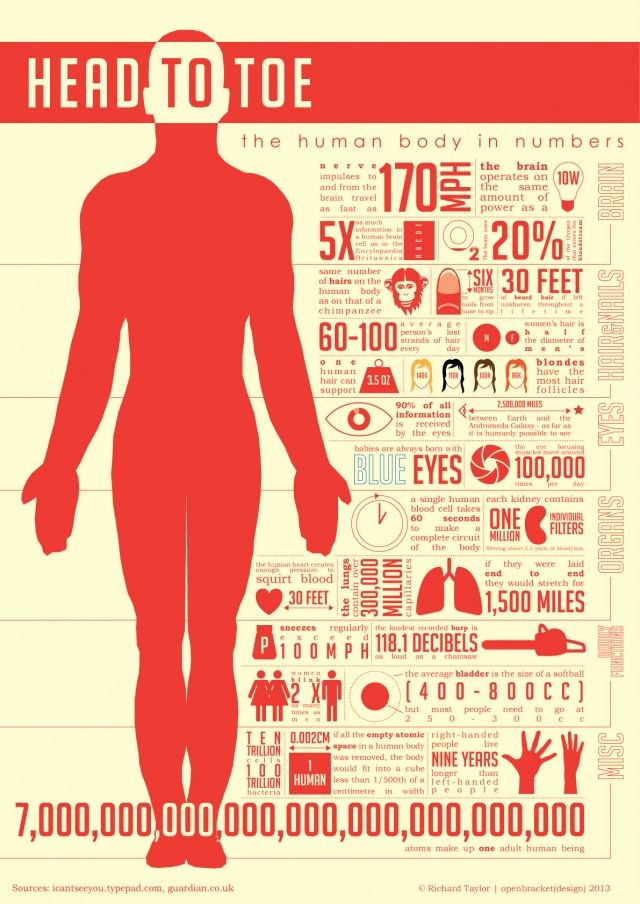 Human body (Head to toe)--great for students to analyze at the beginning of the human body unit!