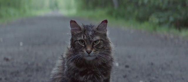 Pet Sematary 2019 In 2020 Pet Sematary Pets Cats