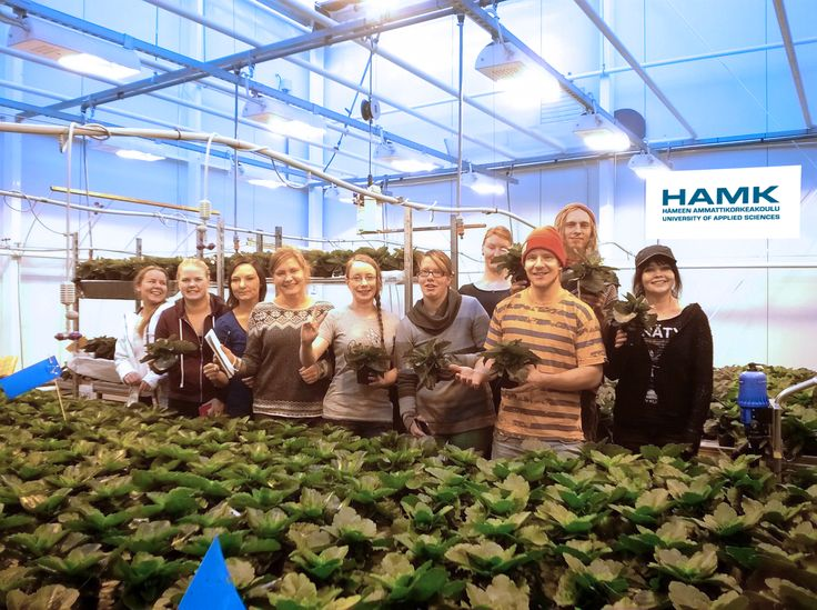 Tässä ryhmä joka kasvattaa ehkä Suomen komeimmat tulilatvat.