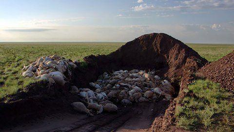 Los efectos del calentamiento global ya se resienten en la naturaleza. Cada vez son más frecuentes las muertes masivas de animales en todo el mundo.