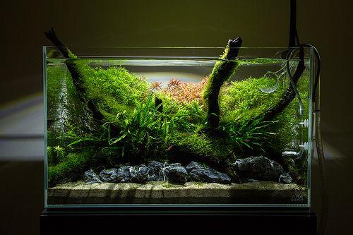 Unfinished 60cm Nature Aquarium | Flickr - Photo Sharing!
