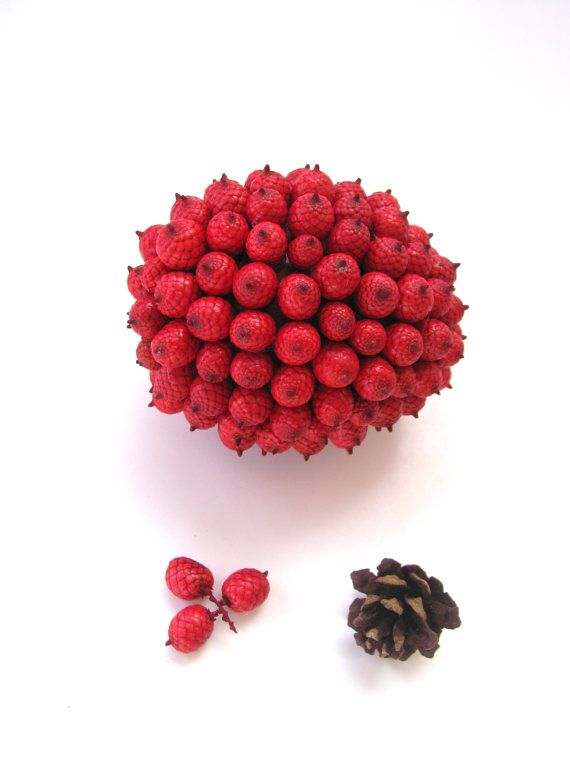 23 best Canella Berries images on Pinterest | Berries, Dried ...