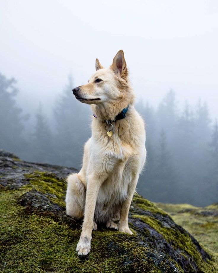 Dog Friendly Victoria, BC. Image by @westcoast koda on Instagram