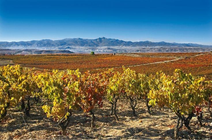 Parcela Caracol, Bodegas Muriel, Rioja