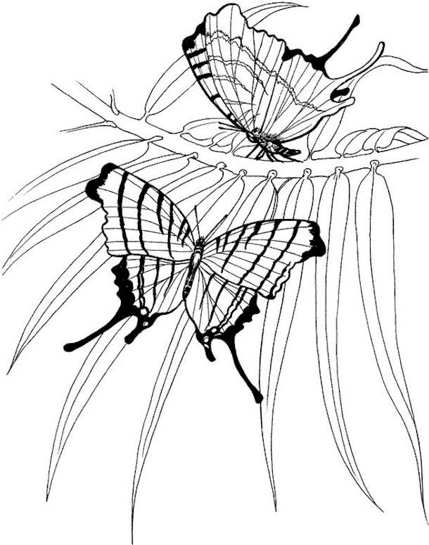 126 Best Birds Insects Etc Coloring Pages 2 Images On Pinterest