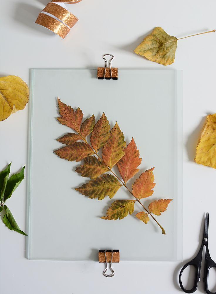 DIY: Herbstblätter im Glas-Bilderrahmen | we love handmade