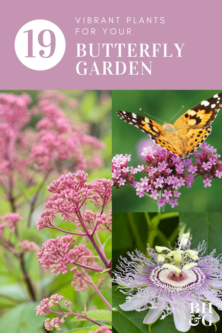 Plants for Your Butterfly Garden 3844 best