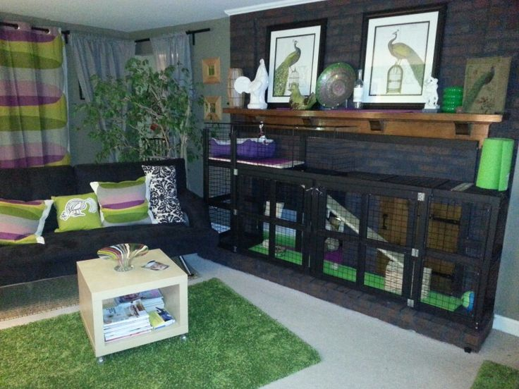 Custom rabbit cage in my IKEA living room for my English Lop! @palominofarm Instagram