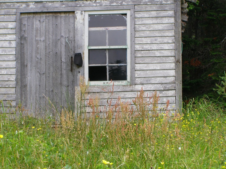 Old Shed and fire weed, Portland Creek Newfoundland. Photo taken by Alyx Perry.