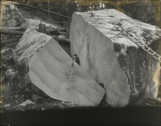 Fotos impresionantes de talas de árboles gigantes