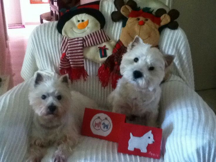210 best A Westie Christmas images on Pinterest | Animals ...