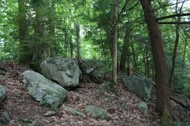 interesting rocks in forest - Google Search