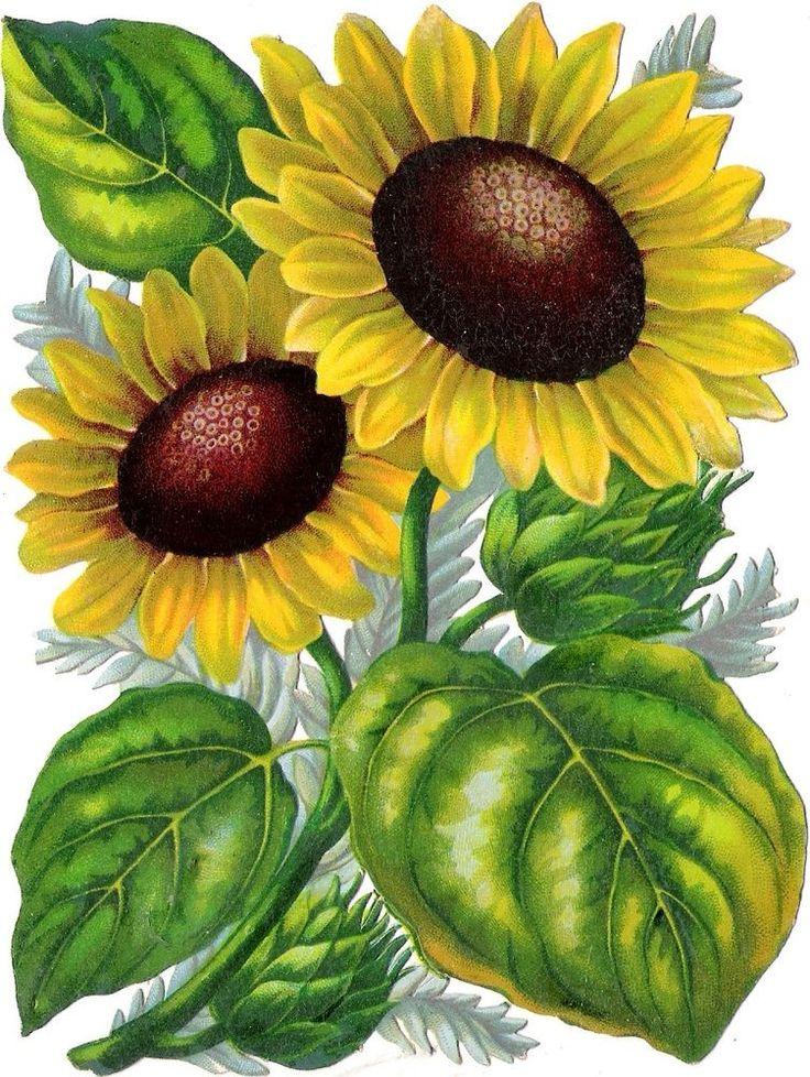 Oblaten Glanzbild scrap die cut chromo Sonnenblume 15,5 cm sunflower fleur: