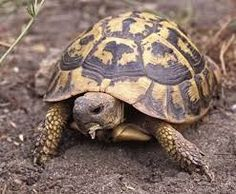 #hibernation de la #tortue sur le #blog #zoomalia http://www.zoomalia.com/blog/article/hibernation-tortue.html