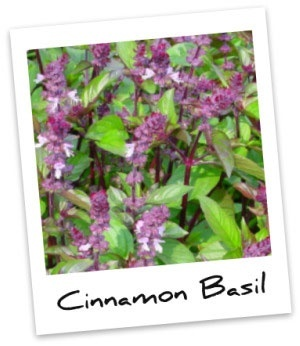 Cinnamon Basil tea: 4 cups of water in a pot 3 cups of this herb's leaves 4 teabags of black tea Sugar for taste Thinly sliced orange