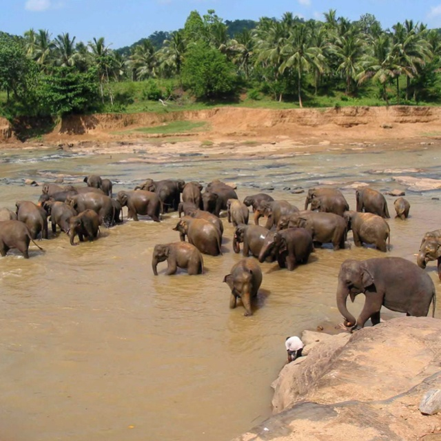 Sri Lanka - elephant orphanage. One of the best experiences of my life x