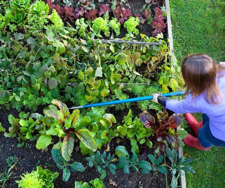 f65c8a8e38fd06bf6671987e5ad344c6 - University Of California Master Gardener Program