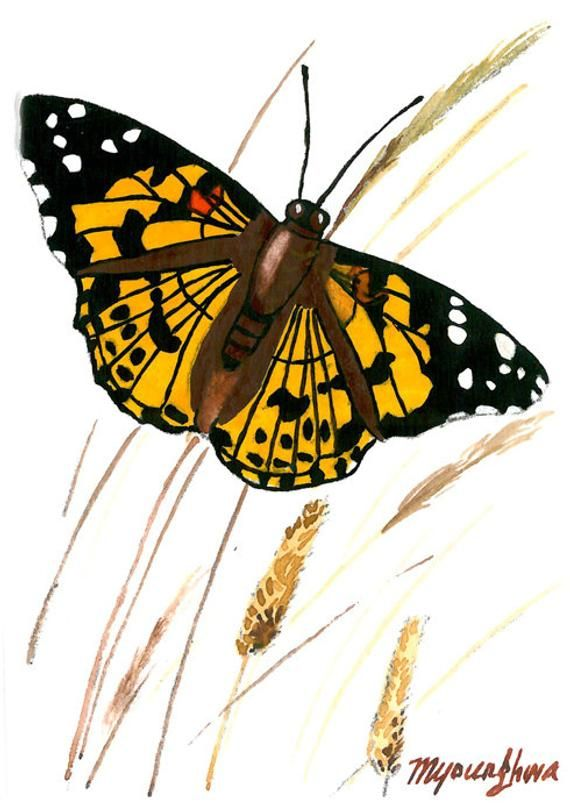 ACEO Limited Edition Butterfly